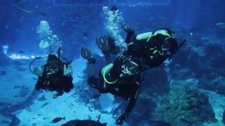PADI Open Water Diver Course at S.E.A. Aquarium, Resorts World Sentosa