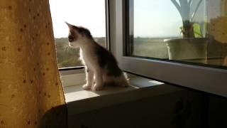 Котята отдам в добрые руки. Нижний Новгород
