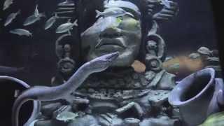 experience the great maya reef at audubon aquarium of the americas