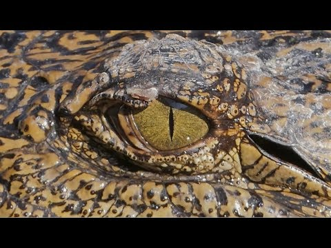 saxon-–-predator-(official-video)