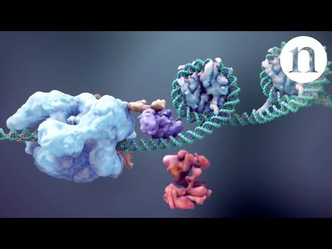 CRISPR: Gene editing and beyond