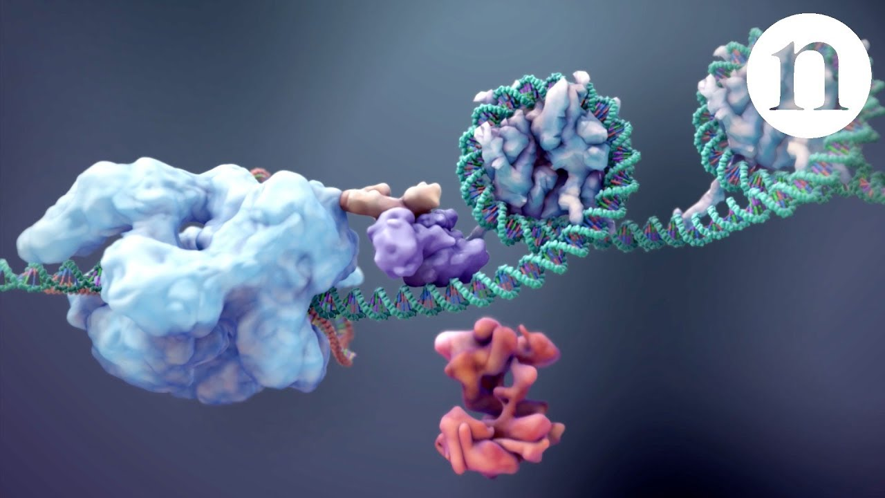 CRISPR: Gene editing and beyond