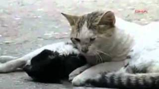 Дарите жизнь , берите пример с животных