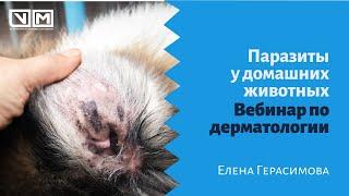 Паразиты у домашних животных. Вебинар по дерматологии