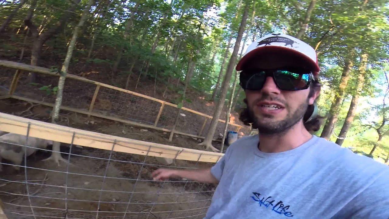 ask pig farmer ben is it easy raising back yard pigs 1 youtube