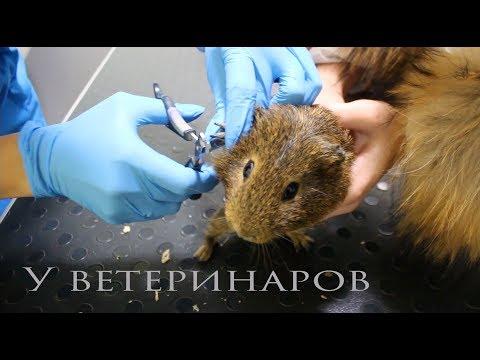 видео: Везем животных к ветеринарам. Плохие новости.
