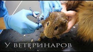 Везем животных к ветеринарам. Плохие новости.
