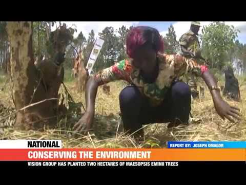 #PMLive: Conserving the environment, Vision group planted two hectares of Maesopsis Eminii trees
