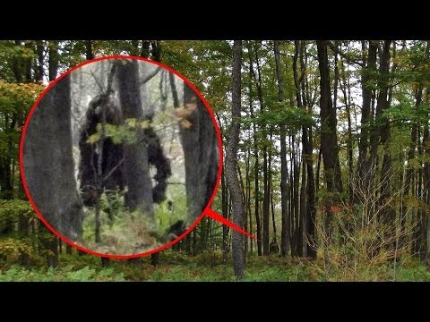 Bigfoot Videos and DNA Tested and Answered