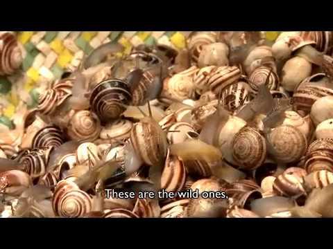 استكشاف المأكولات الشارع في زقاق فاس عتيقة بعيون أمريكية/Food Fez Morocco