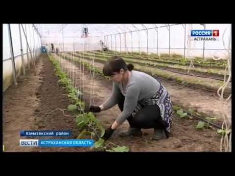 Фермеры Астраханской области готовятся собрать первый весенний урожай к светлому празднику Пасхи