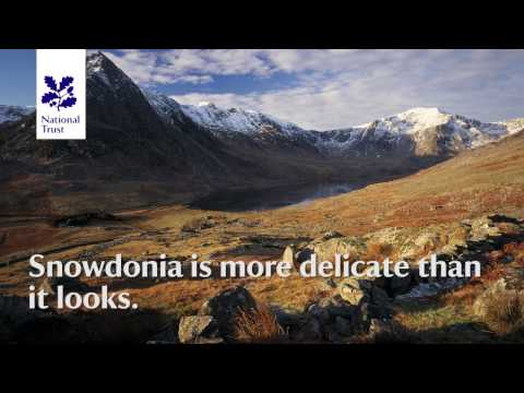 Snowdonia Appeal