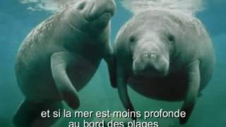 """Découverte, espoir chanson française Christine DAVI : """"Les lamantins des sables"""""""