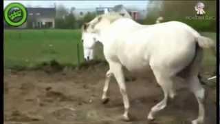 At, Kadını Fena Çifteliyor!