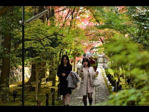 2016嵯峨野鹿王院の紅葉 Kyoto Rokuouin temple Autumn leaves
