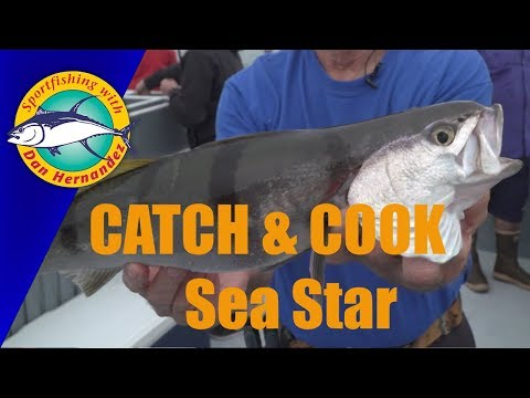 CATCH & COOK - Sea Star | SPORT FISHING