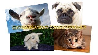 Домашние животные | Развивающий ролик для детей о домашних животных | Слайд-шоу (HD)