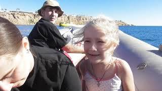 Экскурсии Египет Скоростной катер Лодка с прозрачным дном
