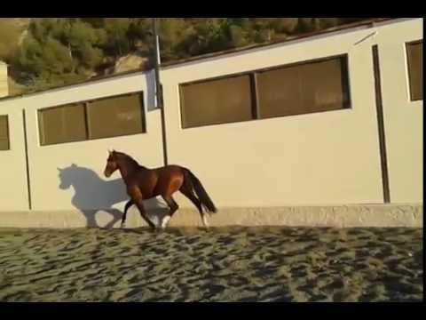 лошадь фото гнедая