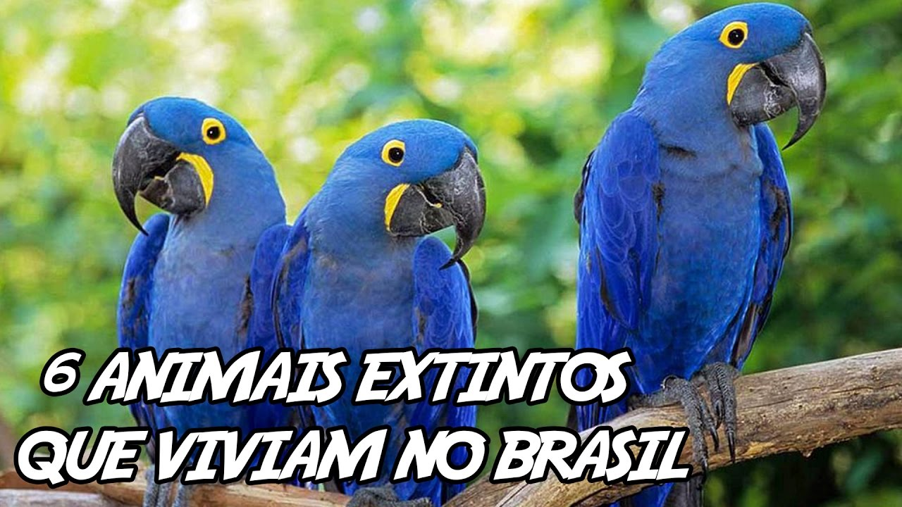 6 Animais Extintos Fascinantes Que Viviam No Brasil Youtube