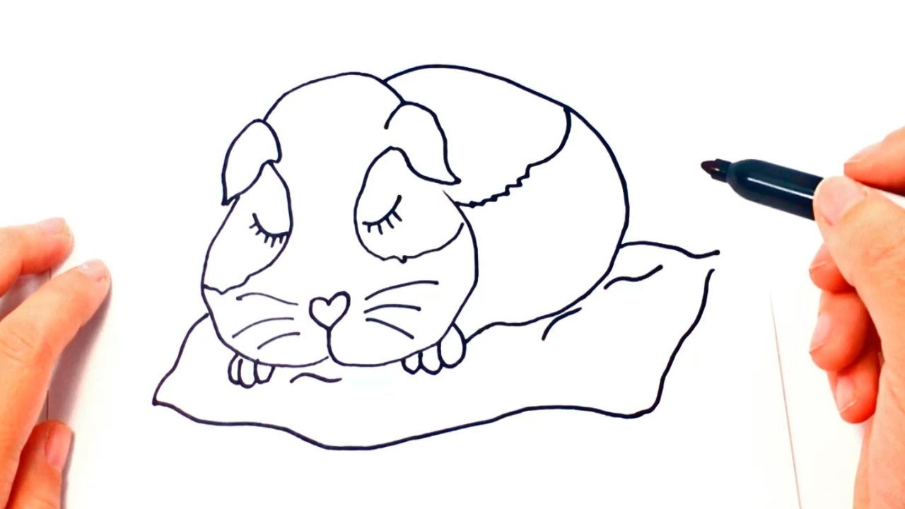 Uncategorized How To Draw A Guinea Pig Step By Step how to draw a guinea pig step by youtube step