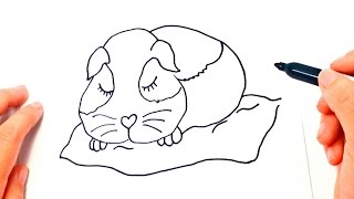 How to draw a Guinea pig Step by Step