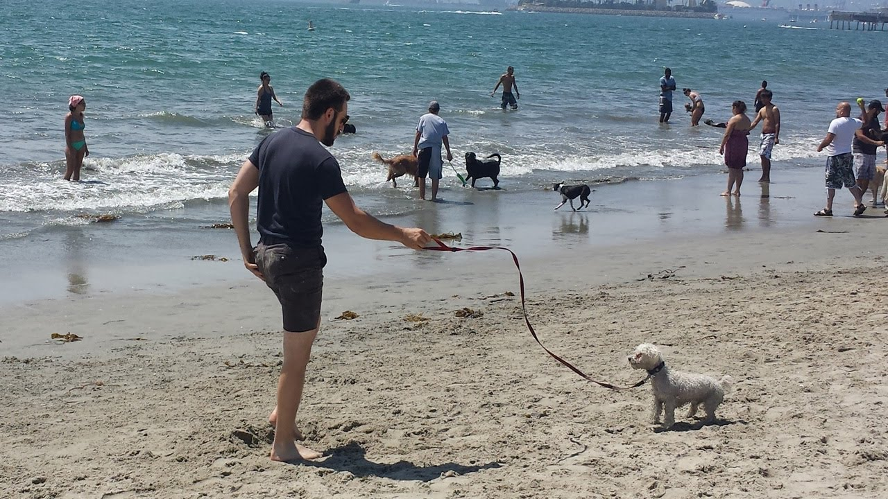 Image result for long beach dog