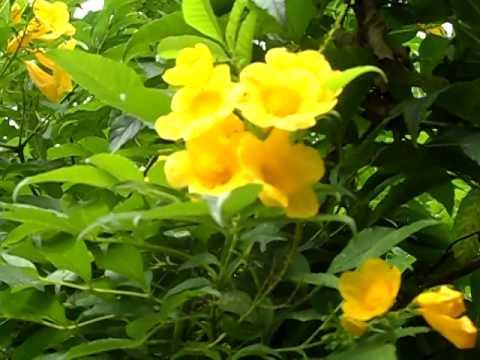 Flores Amarelas Muito Lindas Youtube