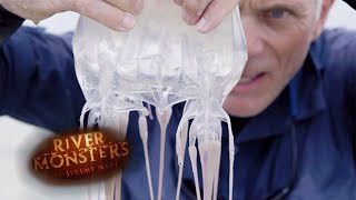 The Deadliest Venom In World | BOX JELLYFISH | River Monsters