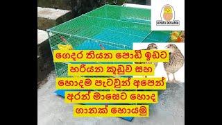 වටු පාලනය/ Quails farmming / kadai koli  (Supertec incubators pvt ltd.)