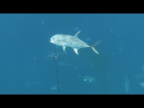 Fishing with remote control boat from YouTube · Duration:  2 minutes 22 seconds  · 767.000+ views · uploaded on 30.05.2007 · uploaded by fisherman1168