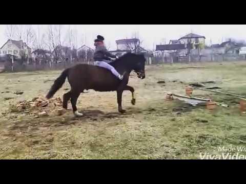 Вопрос: Что такое каштаны у лошади?