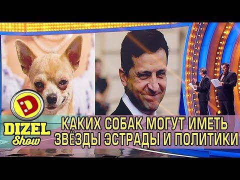 Вопрос: Породы каких собак предпочитают звёзды Голливуда?
