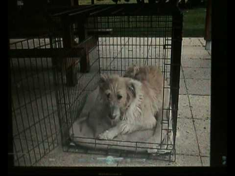 Victorian Dog Rescue's Barnaby on Channel 10 News, Melbourne