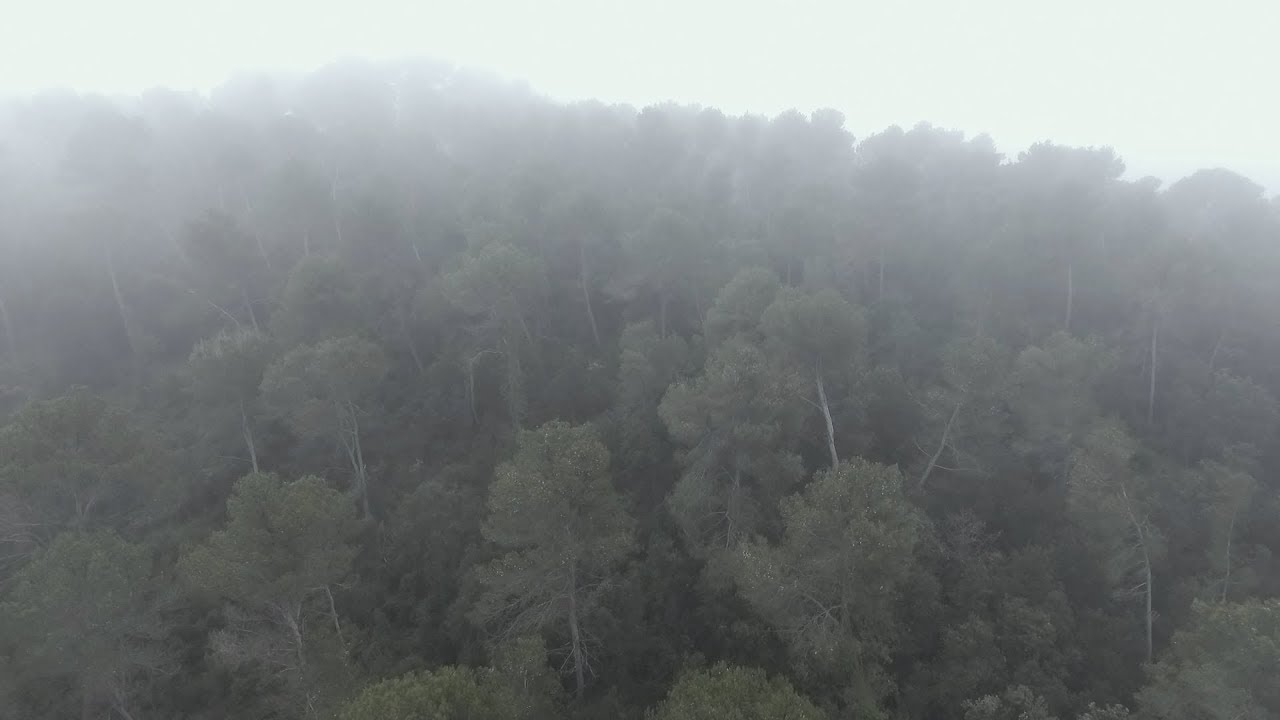 Free Stock Footage Nature Drone Full HD