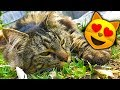 Adventures Of Fluffy Cat 😻 The Fail Fat Cat Episode 1
