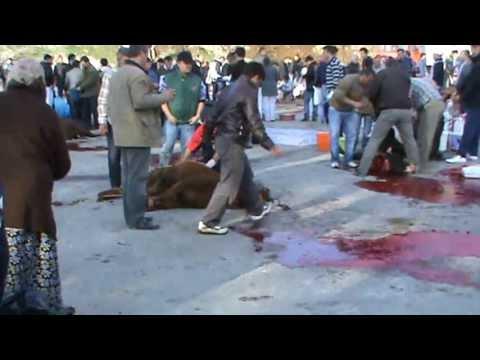 Kurban Kesimi KKB. Sacrifice predict the ladies. Butcher cutting bull drew women to the camera.