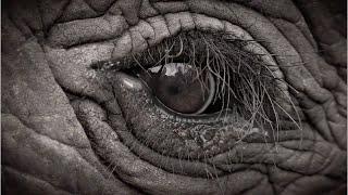Andrea Turkalo: Return to Dzanga | 96 Elephants