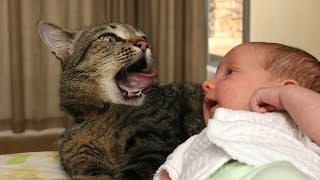 Funny and Cute Cats Kissing Babies Compilation (2017)