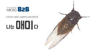디지버드 USB현미경 MSP-120FPS 여름 곤충 매…