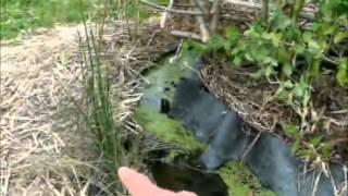 Système aquatique chinampas
