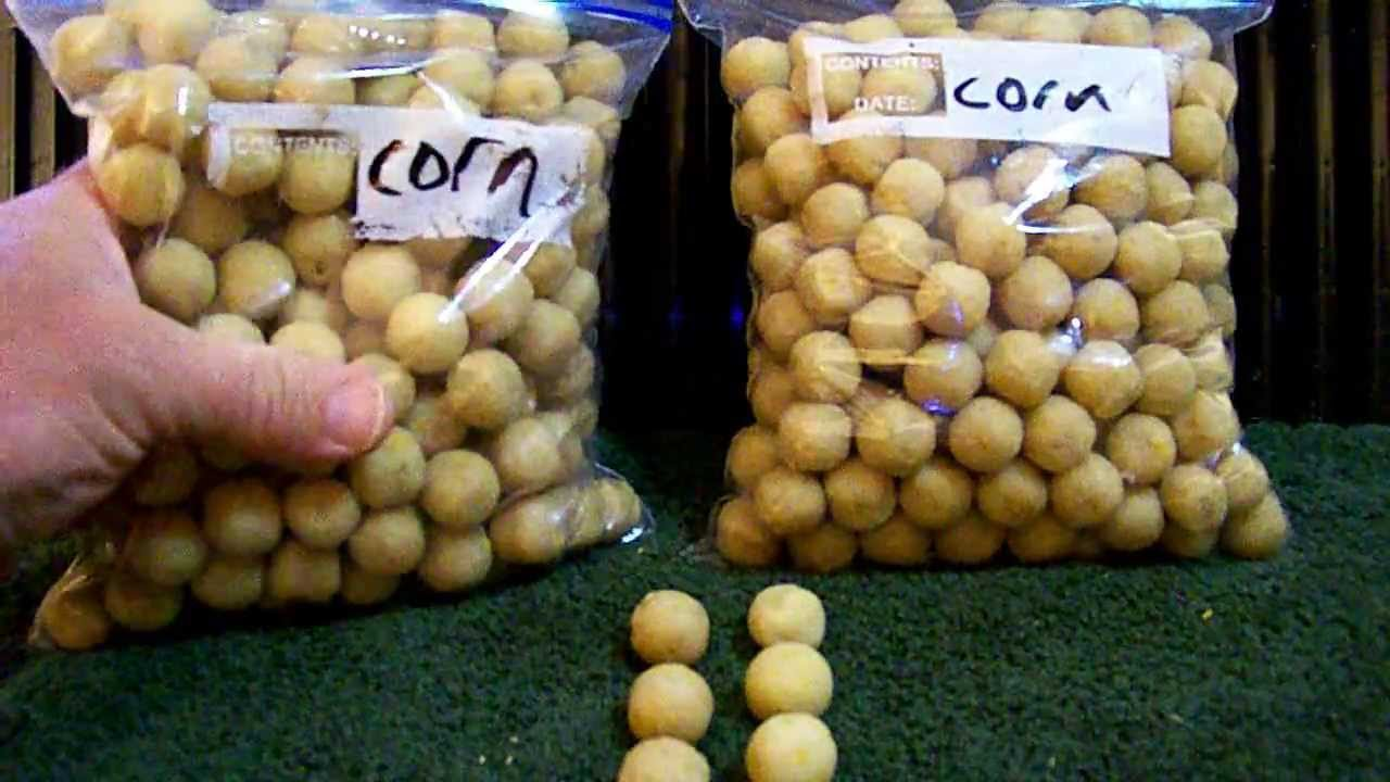 What are boilies? How to catch carp with boilies? - YouTube