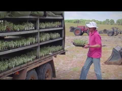 Future Farm Industries CRC - Enrich Forage Shrubs