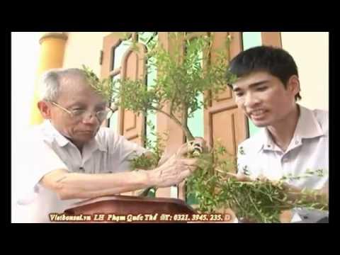 Kỹ thuật tạo kiểu cành cơ bản cho cây cảnh- P3/4 * alomua.vn, huongsacdatviet.com, tacphamvietnam