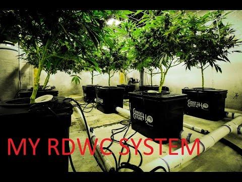 My DIY DWC / RDWC System