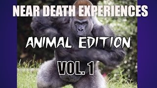 near death experiences caught on camera animal edition vol 1