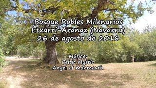 Bosque Robles Milenarios (Navarra)
