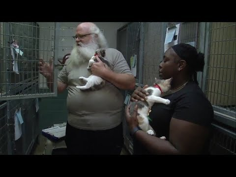 Oakland Animal Shelter makes room for cats from the fire zone