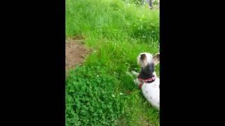 딸랑이의 봉황대공원 산책