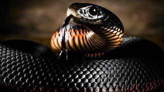 Редкие фото животных-убийц, поражающих своей смертоносной красотой